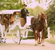 Horse Drawn Carriage | Destarte Weddings in North Carolina