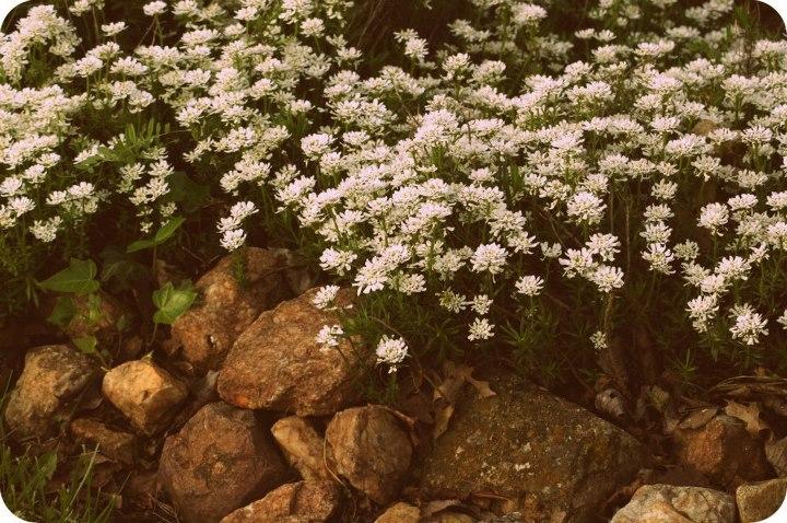 north-carolina-flowers