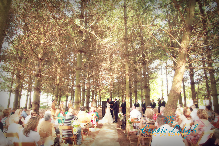 pine-forest-wedding
